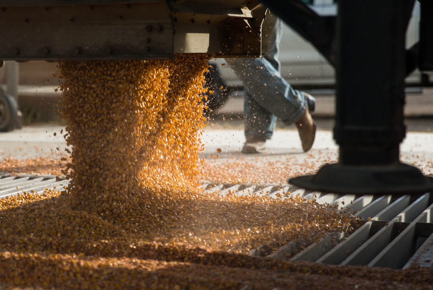 Over 50,000 pounds of the Thyen farm's dry corn gets unloaded at the elevator in LaBolt on Tuesday, Oct. 31. ©2017 Grace Ramey