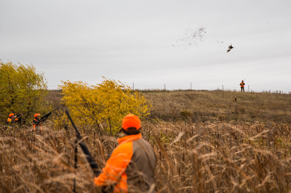 Another bird downed during pheasant hunting season opener