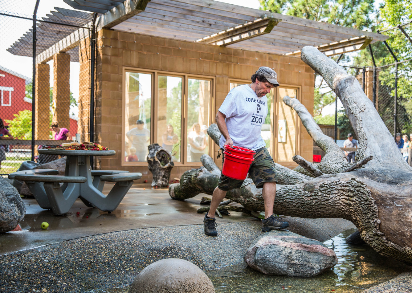 Zookeeper John Gilman sets out treats in the bear enclosure for the 11 a.m. feeding demonstration Wednesday morning, Aug. 2 at Bramble Park Zoo. ©2017 Grace Ramey