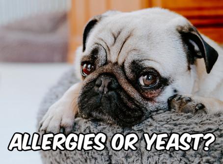 Itchy dog?