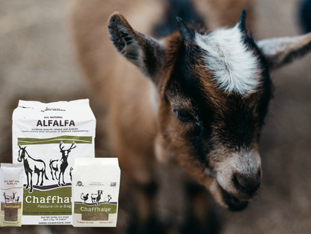 Friendly Goats & Happy Rabbits - the benefits of Chaffhaye as told by a happy customer