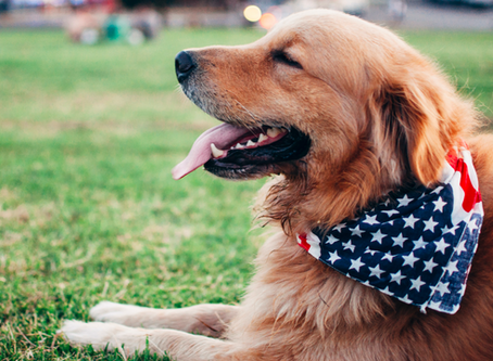 How to Enjoy the 4th of July with your Dog