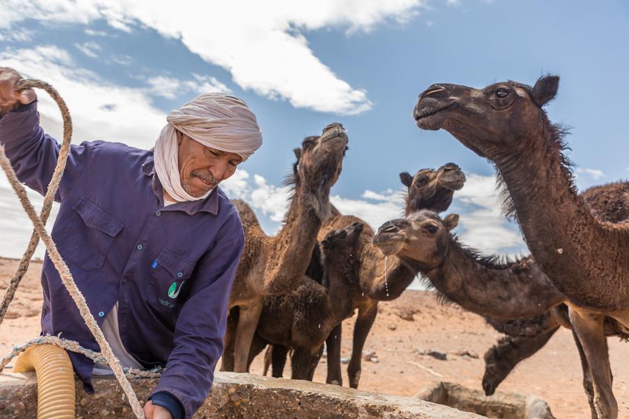 ALI THE CAMEL HERDER