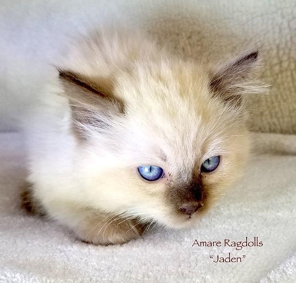 Jaden 20201019_141649.jpg
