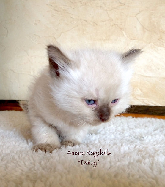 Daisy_20210515_141920116.jpg