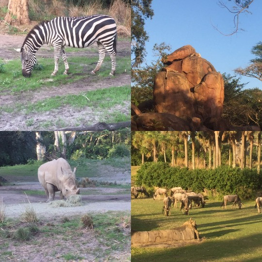Animal Kingdom Kilimanjaro Safaris