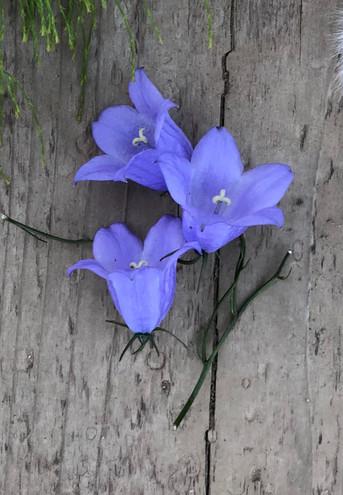 Blåklocka Wildflowers