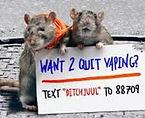 rats (2).jpg