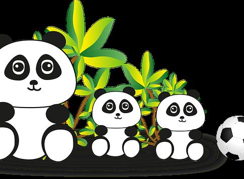 Lernen Sie die Pandas aus Eupen kennen