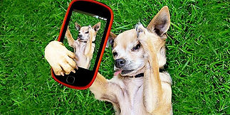 cell_phone_dog_275-780x3901.jpg