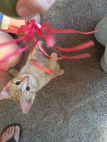 Play Kitty.jpg