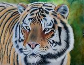 Tiger after Julie Langdon