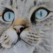 Puss puss