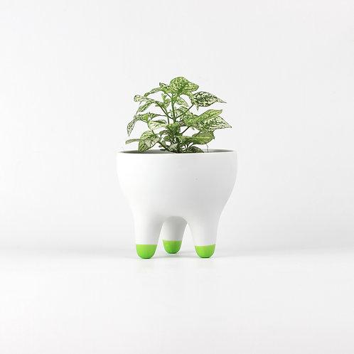 Vaso Raiz P [pés verde]