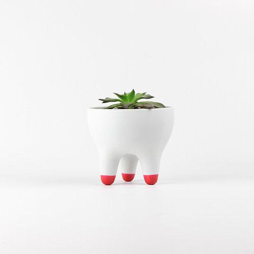 Vaso Raiz P [pés vermelho]