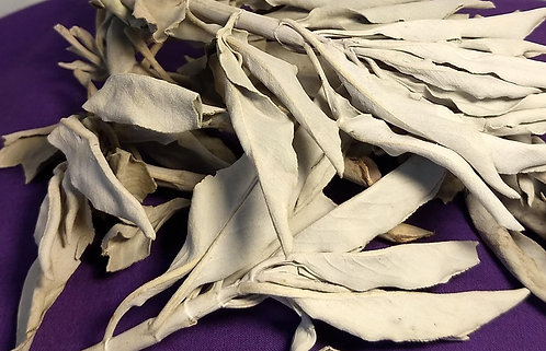 California White Sage/ Smudging