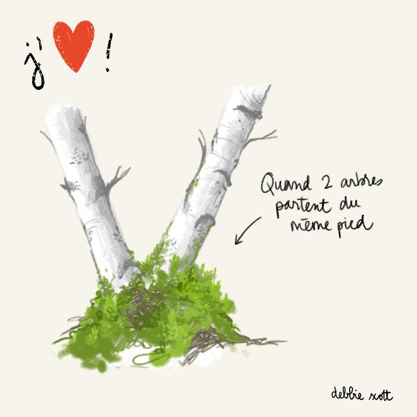 2 arbres 1 pied