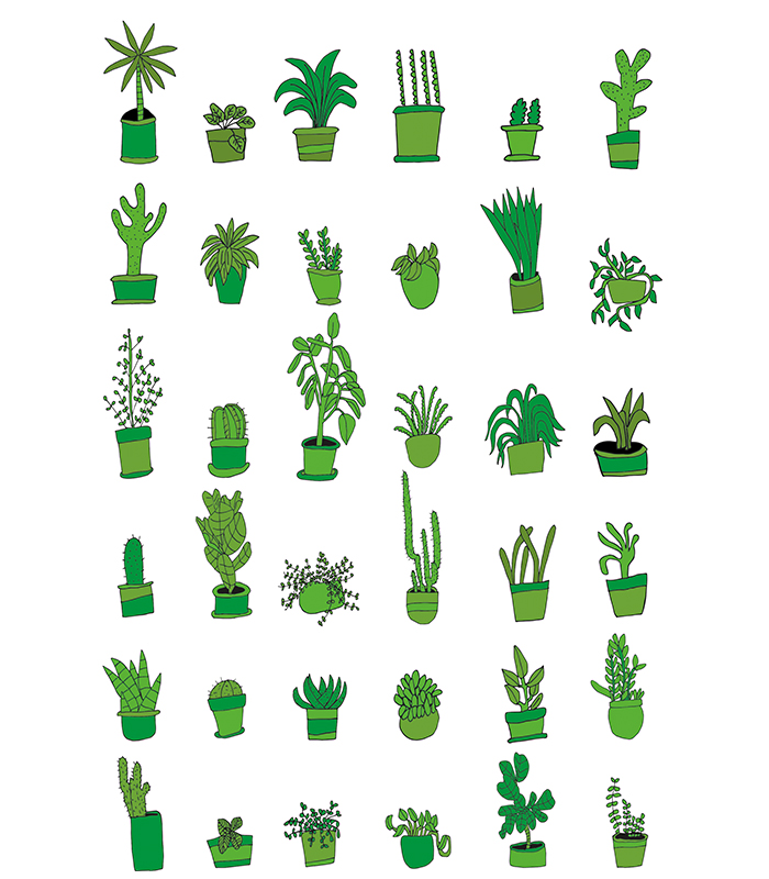 36 Plants / 2015