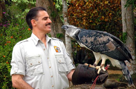 Harpy Eagle Project Panama