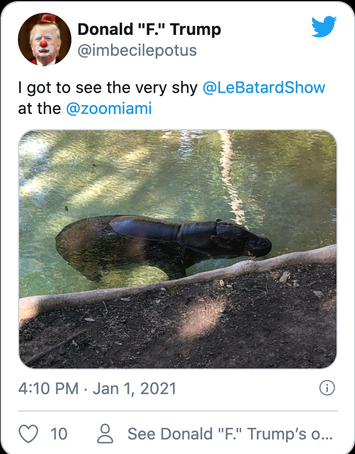 Hippo 1.png