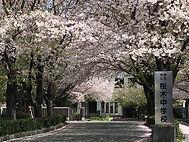 桜木中フォト.jpg