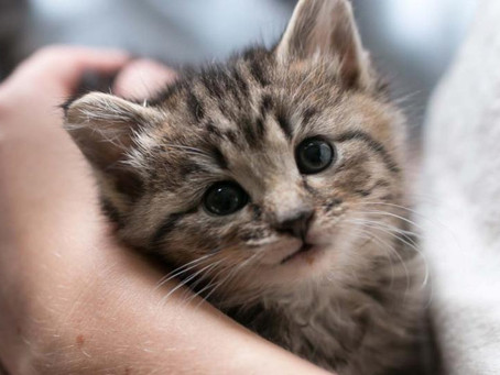 Fostering a Pet:  How you can make a difference