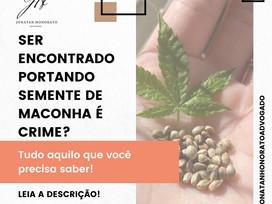 PORTAR SEMENTE DE MACONHA É CRIME?