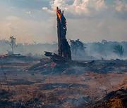 Crisis del Amazonas.png