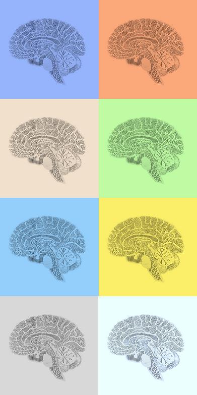 brain grid.png