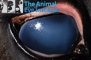 Animal Eye Institute Of Cincinnati Northern Kentucky And