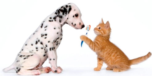 Dog and cat with Toothbrush
