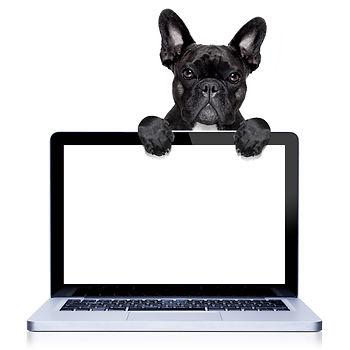 french bulldog dog  behind a laptop pc c