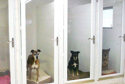 Boarding facility with dogs
