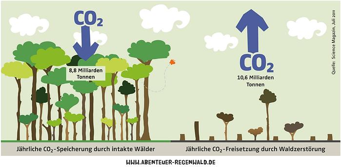 www.abenteuer-regenwald.de.png