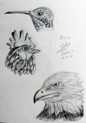 CALARTS - animal - birds.png