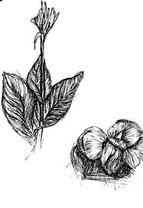 flower plant.jpg