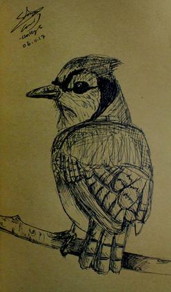 Sketch bird.png