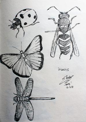 CALARTS - animal - insects.png