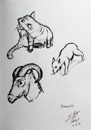 CALARTS - animal - mammals.png