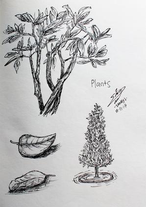 CALARTS - plants.png