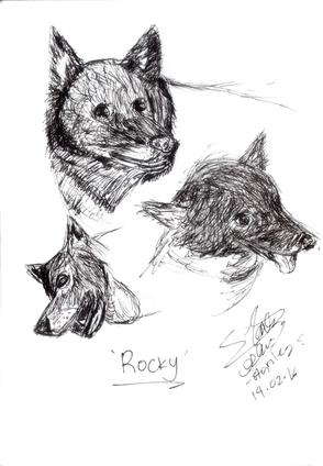 Sketch dog ROCKY.png