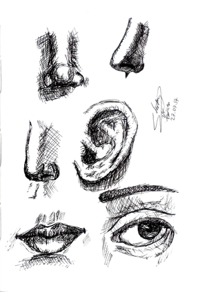 Sketch study shade.png