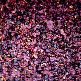 Weingut Herbst_118.JPG