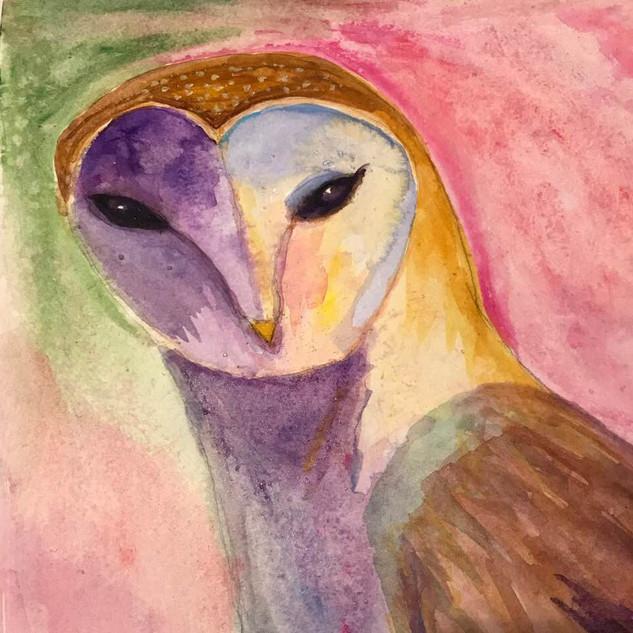 Pink Night Owl