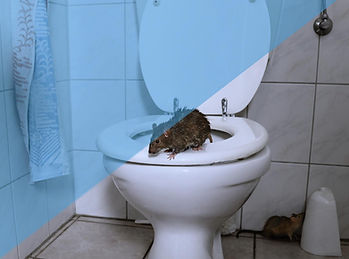 Rodent Investigations