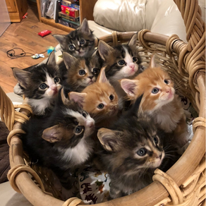 Basket of Cuteness