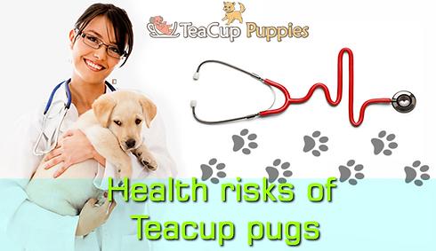 Health-risks-of-teacup-pugs-teacuppuppie