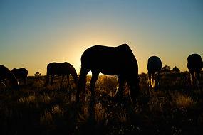 horse  Feb 25 2015 new.jpg