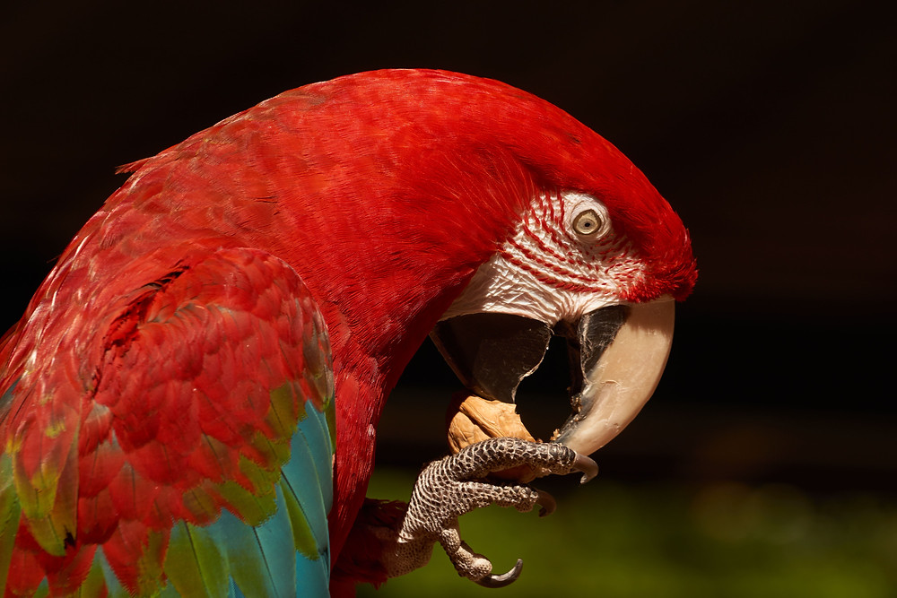 There are no related photos for this post, so here's a parrot.