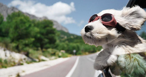 Pet-Travel-Tips-Staying-Safe-while-Trans